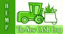 "industrial hemp, aka ""the new cash crop"", in Colorado"